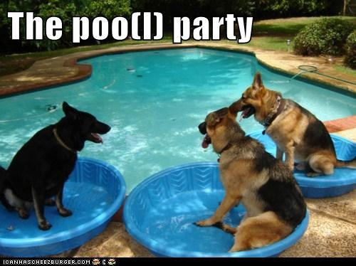The poo(l) party