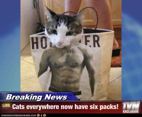 Breaking News - Cats everywhere now have six packs!