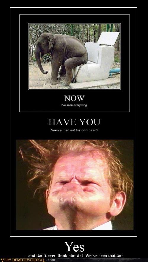 elephant,internet,toilet,i've seen everything