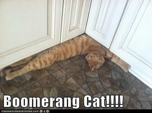 Boomerang Cat!!!!