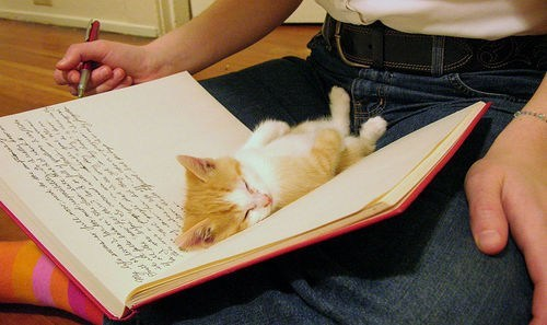Cyoot Kitteh of teh Day: Bookworm