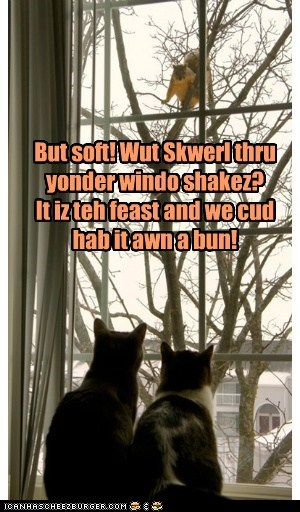 If Romeo and Juliet Were Kitties