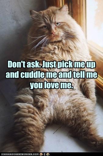 cat,cuddle,cuddles,love,funny,hug