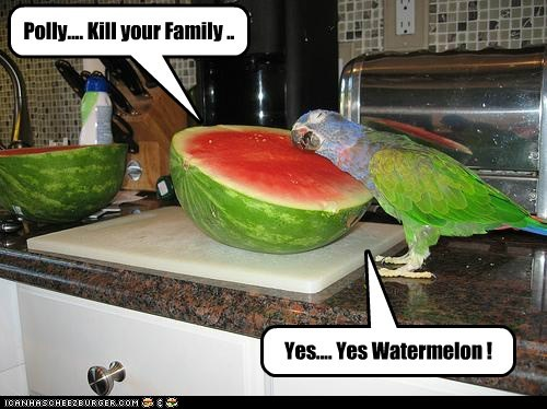 polly,possessed,parrots,listening,amily,watermelon,kill