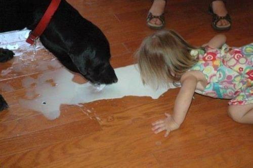 spilt milk,toddlers,dogs