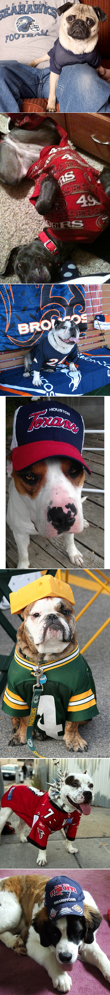 NFL Pups Show Their Team Spirit