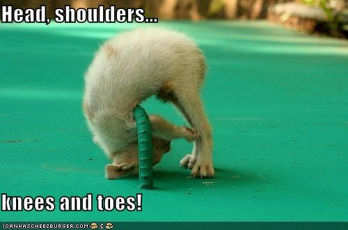 Head, shoulders...  knees and toes!
