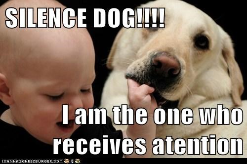 SILENCE DOG!!!!  I am the one who receives atention