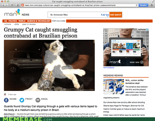 Grumpy Cat caught smuggling contraband at Brazilian prison