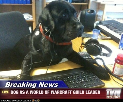 Breaking News - DOG AS A WORLD OF WARCRAFT GUILD LEADER