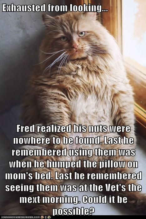 Exhausted from looking...  Fred realized his nuts were nowhere to be found. Last he remembered using them was when he humped the pillow on mom's bed. Last he remembered seeing them was at the Vet's the mext morning. Could it be possible?