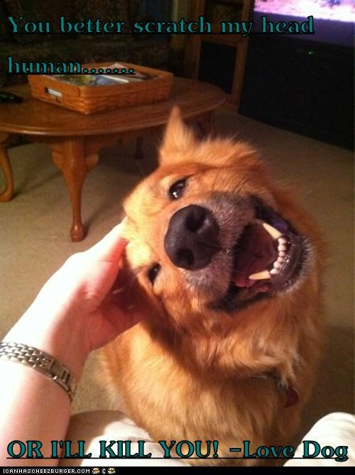 You better scratch my head human.......  OR I'LL KILL YOU! -Love Dog