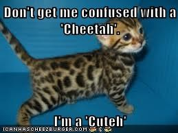 Don't get me confused with a 'Cheetah'.  I'm a 'Cuteh'