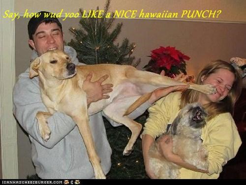 Say, how wud yoo LIKE a NICE hawaiian PUNCH?