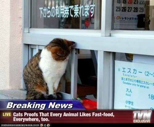 Breaking News - Cats Proofs That Every Animal Likes Fast-food, Everywhere, too.