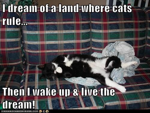 I dream of a land where cats rule...  Then I wake up & live the dream!