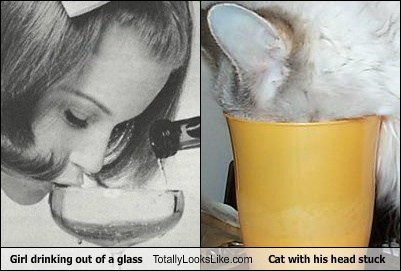 Girl drinking out of a glass Totally Looks Like Cat with his head stuck