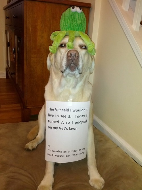 dogs,birthday,revenge,dog shaming,vet