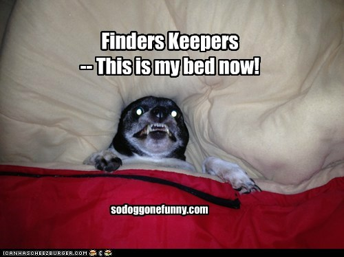 Finders Keepers  -- This is my bed now!