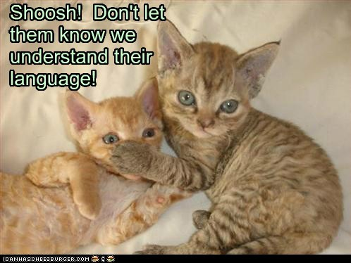 IMPORTANT KITTEH RULES!