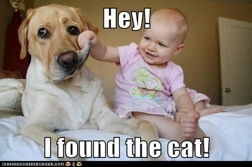 Hey!  I found the cat!