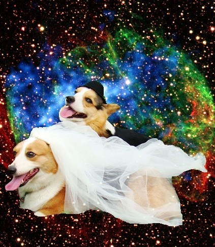 dogs,wedding,married,space,corgis
