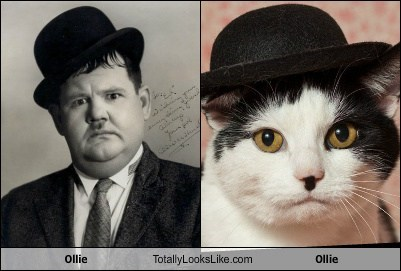 ollie,cat,bowler hat,TLL,Oliver Hardy