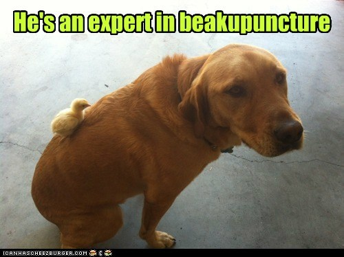 He's an expert in beakupuncture