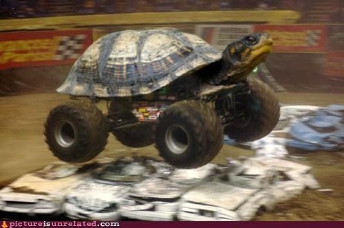 has science gone too far,turtles,monster trucks