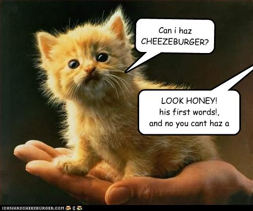 Can i haz CHEEZEBURGER?