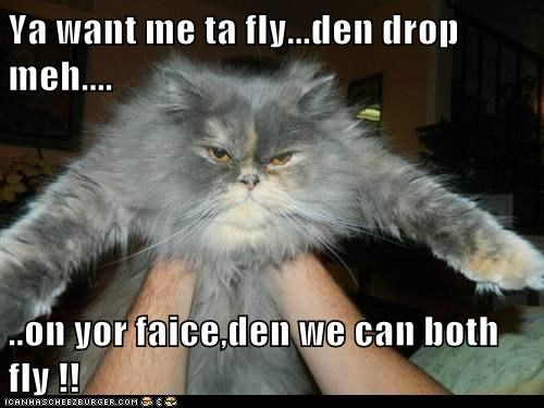 Ya want me ta fly...den drop meh....  ..on yor faice,den we can both fly !!