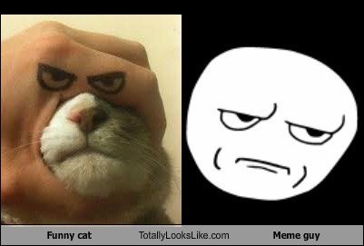 Funny cat Totally Looks Like Meme guy