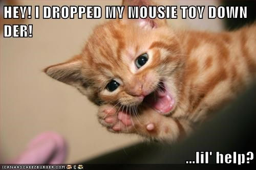 HEY! I DROPPED MY MOUSIE TOY DOWN DER!  ...lil' help?