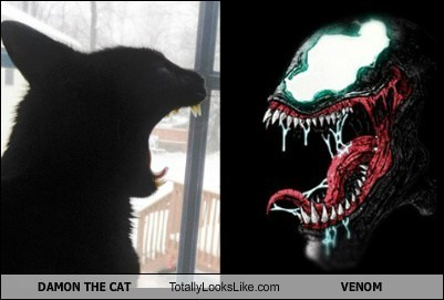 DAMON THE CAT Totally Looks Like VENOM