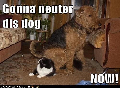 Gonna neuter               dis dog  NOW!