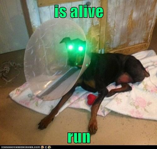 is alive  run