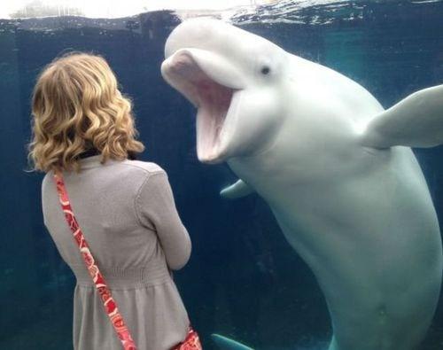 Beluga What?