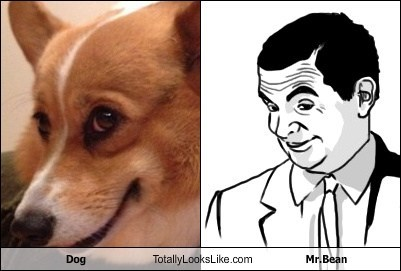 Dog Totally Looks Like Mr. Bean