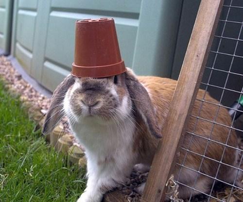 Bunday,garden,flower pot,rabbit,bunny,squee,hat