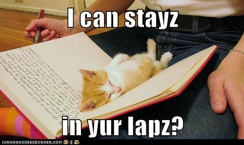I can stayz  in yur lapz?