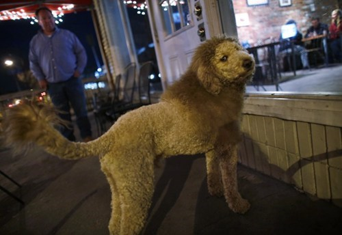 Look at This Lion, Or I Mean This Dog, of the Day