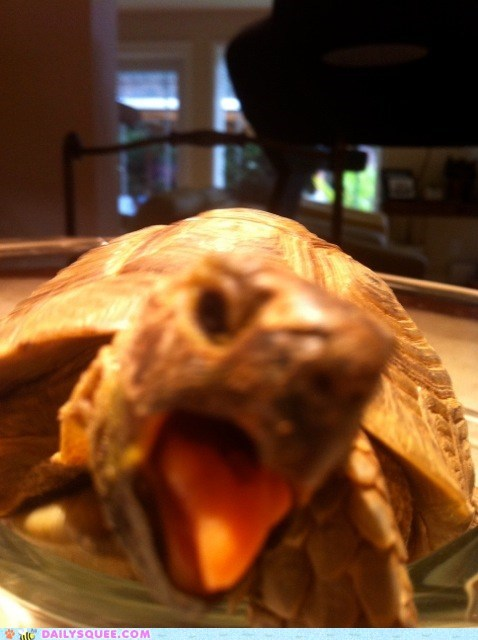 Reader Squee: Gamera
