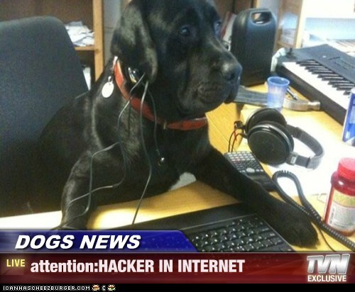 DOGS NEWS - attention:HACKER IN INTERNET