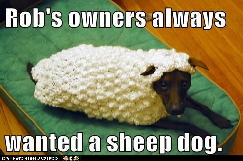 Rob's owners always  wanted a sheep dog.