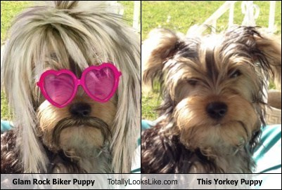Glam Rock Biker Puppy Totally Looks Like This Yorkey Puppy