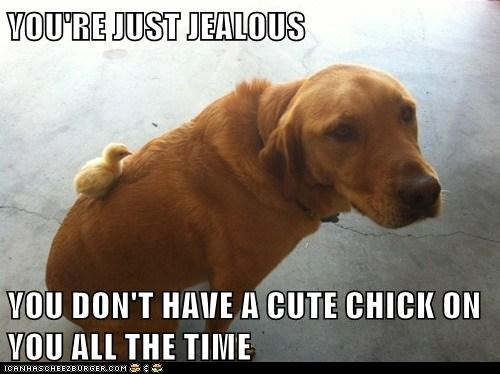 This Dog is a Chick Magnet!