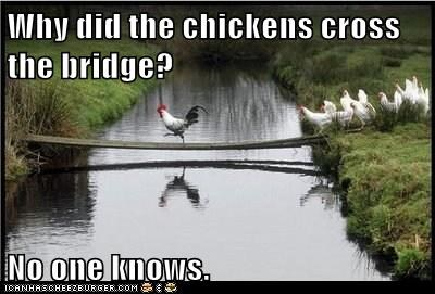Why did the chickens cross the bridge?  No one knows.
