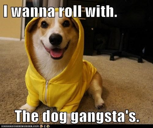 I wanna roll with.  The dog gangsta's.