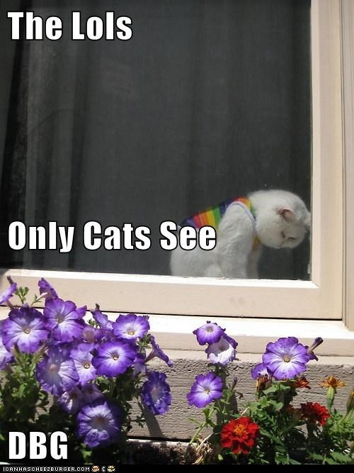 The Lols Only Cats See DBG