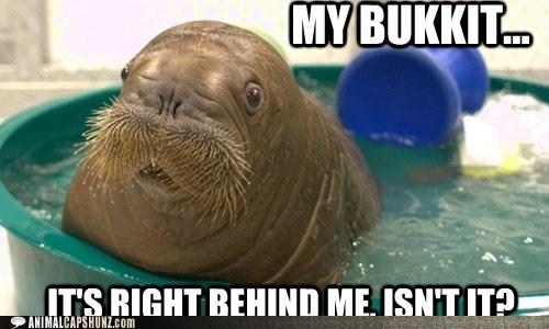 My Bukkit...